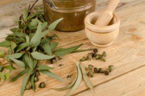 eucalipto, aceites esenciales